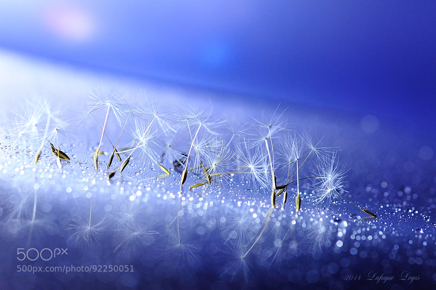 Photograph Twinkle Little Star by Lafugue Logos   on 500px