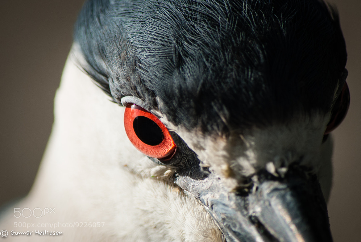 Photograph red eye by Gunnar Helliesen on 500px