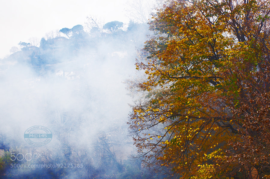 Photograph Beautiful autumn by Mehmet Çoban on 500px