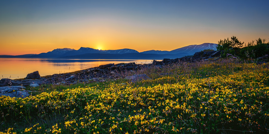 Flowers in the midnight sun de Cato Olsen no 500px.com