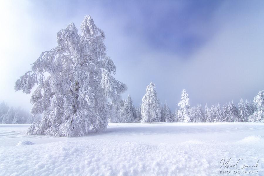 Frozen dream by Max Conrad on 500px.com