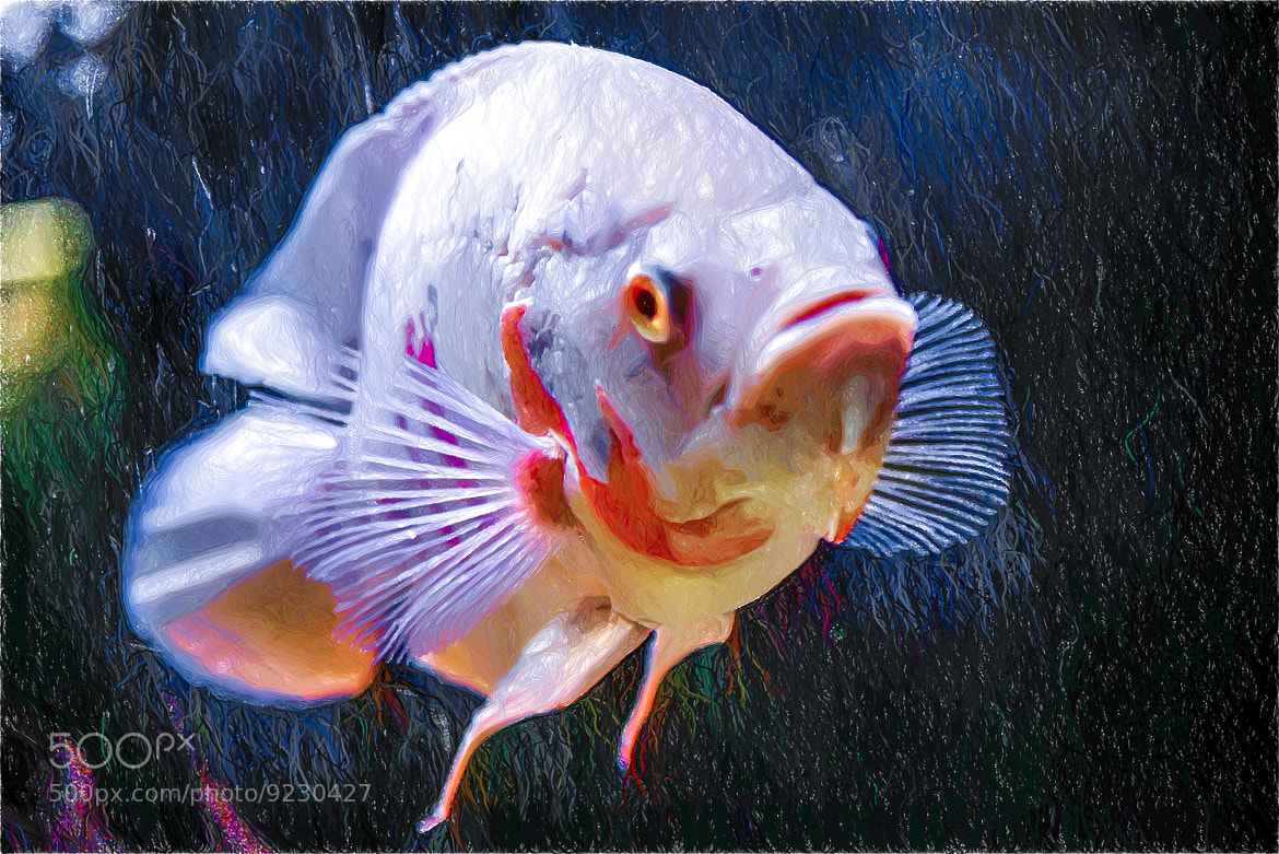 Photograph Carassius auratus by Giovanni Sottile on 500px
