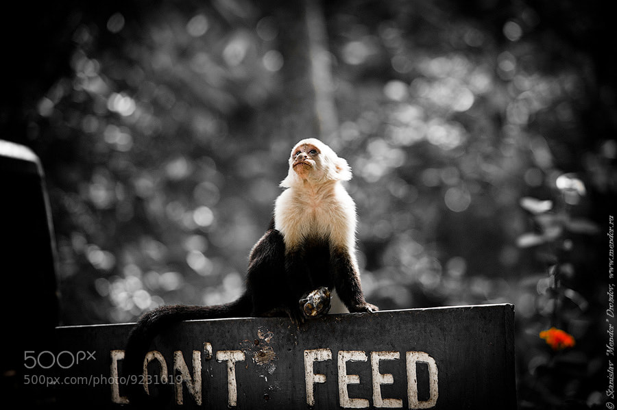 Photograph Don't feed...& by Stanislav Drozdov on 500px