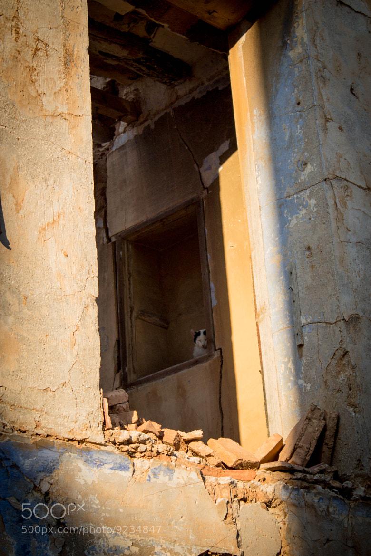 Photograph gatita by Valentina Alexe on 500px