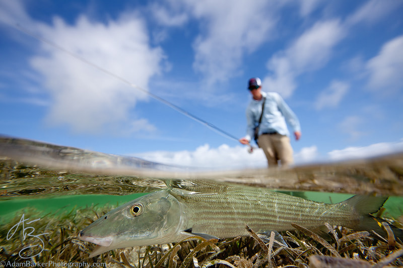 Photograph Bonefish! by Adam Barker/AdamBarkerPhotography.com on 500px