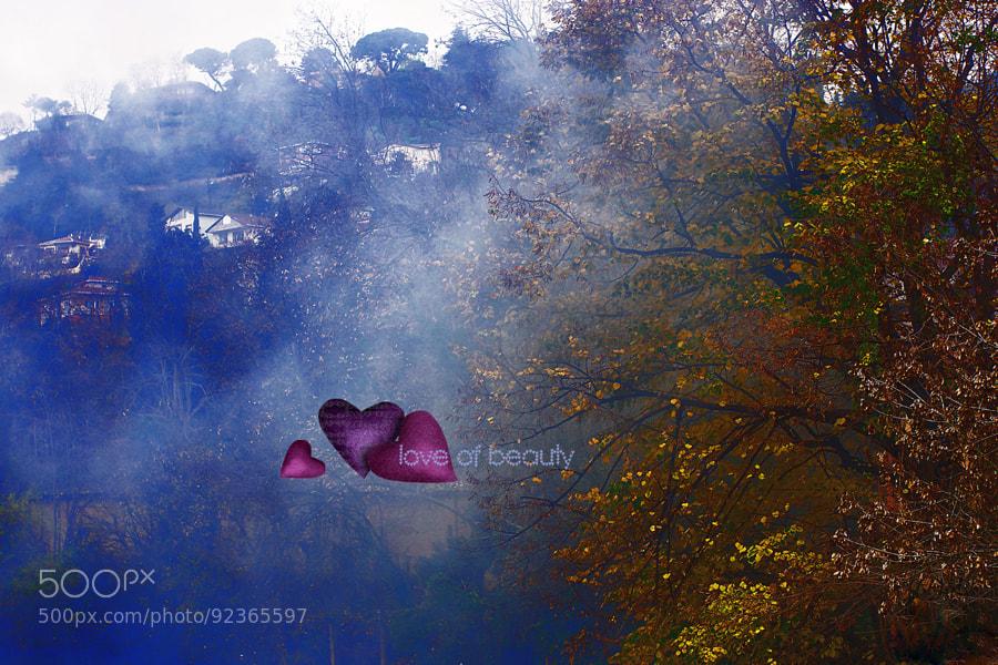 Photograph love of beauty by Mehmet Çoban on 500px