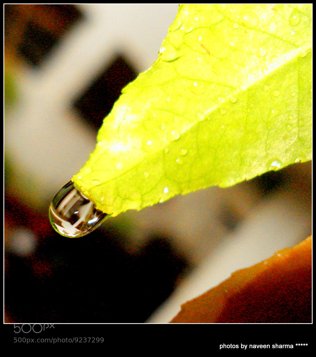 Photograph Fatansy of raindrop by naveen sharma on 500px