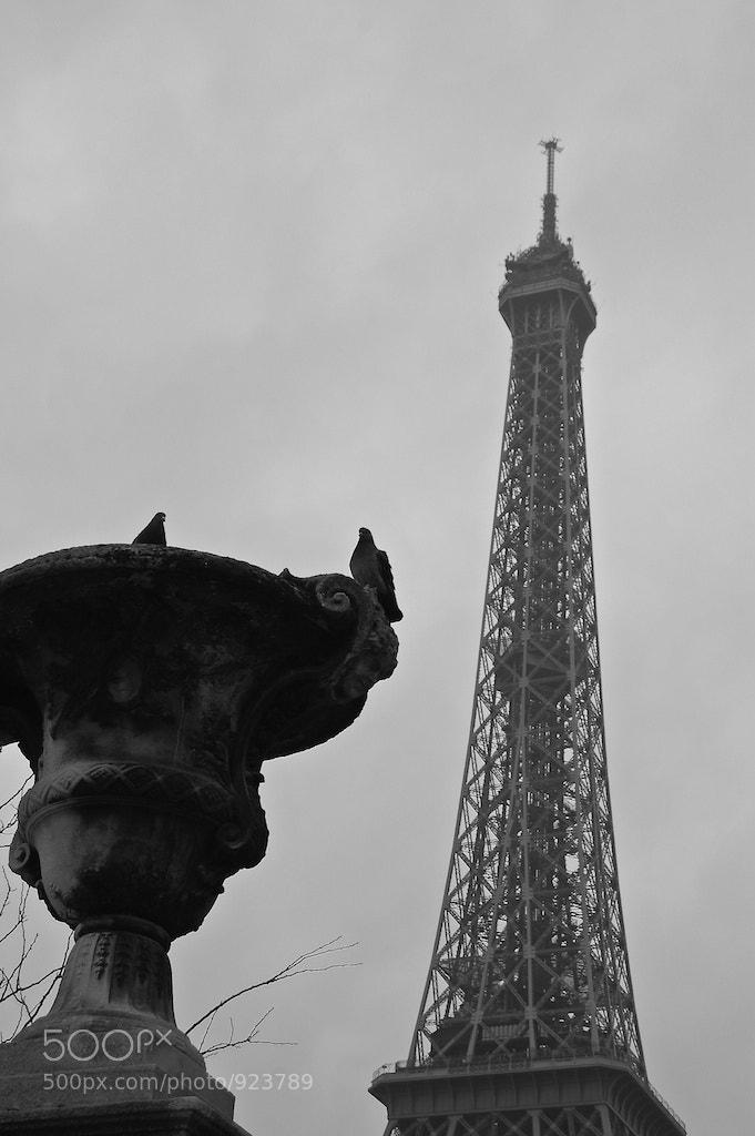 Photograph Eiffel Tower's gardians by Emmanuel Dubois on 500px