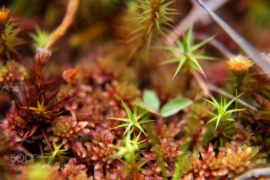 Photograph Tiny jungle by Hessam M. Nik on 500px