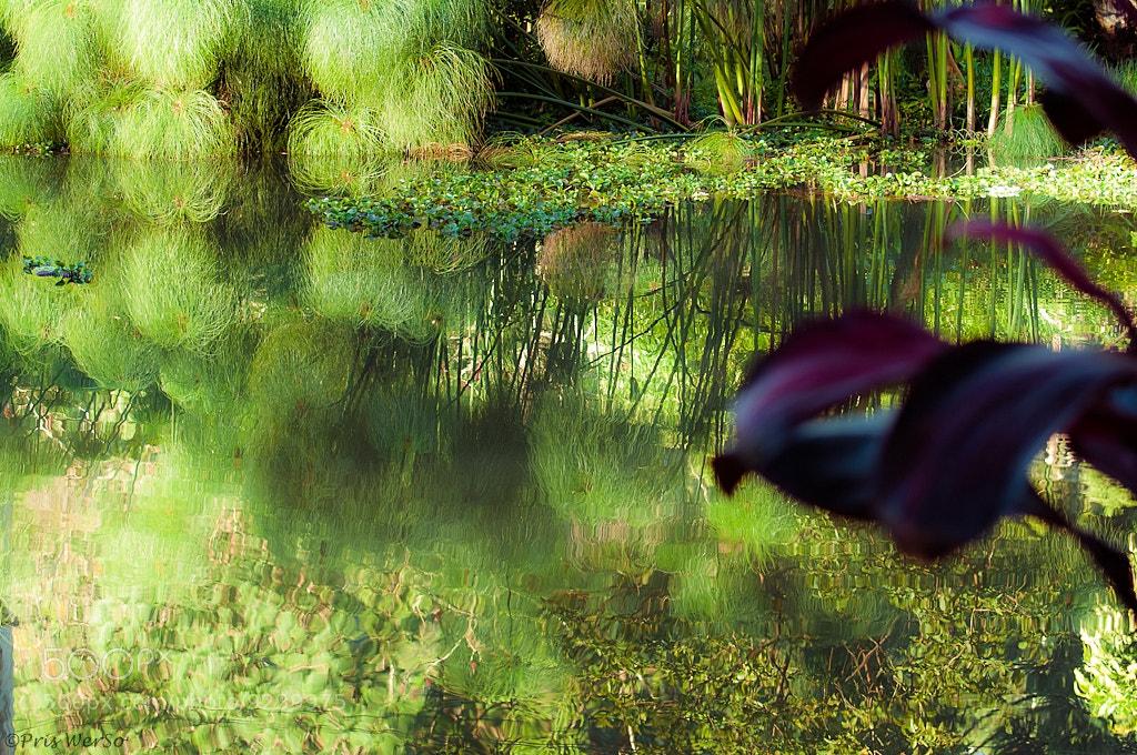 Photograph Reflexo (reflection) by Priscila Werneck on 500px