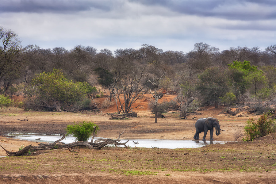 Photograph The Land of The Elephant by Mario Moreno on 500px
