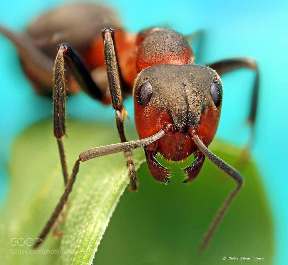Photograph Antmonster by Ondrej Pakan on 500px