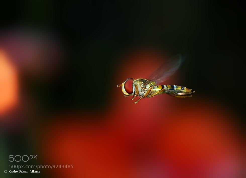 Photograph Red baron by Ondrej Pakan on 500px