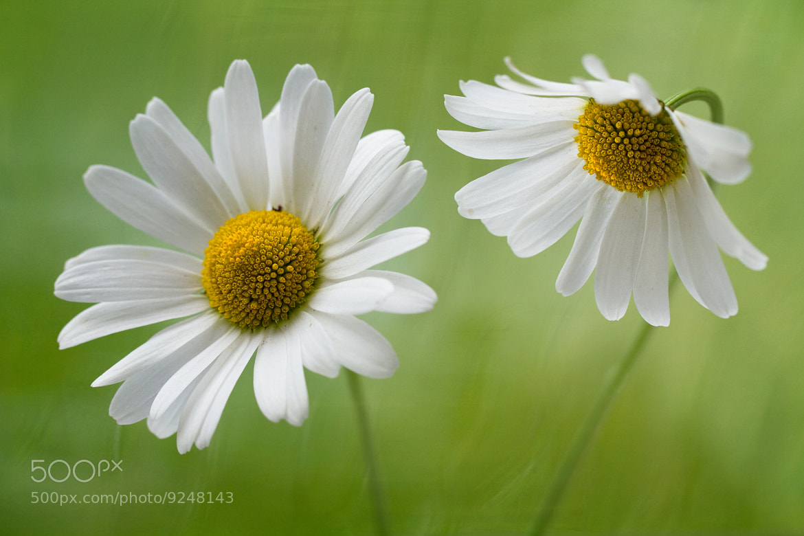 Photograph Talk to me by Mandy Disher on 500px