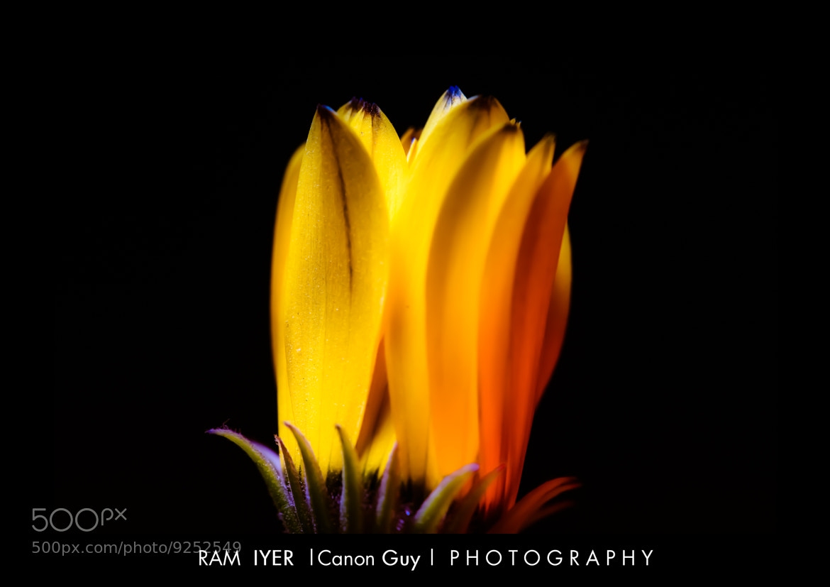 Photograph I glow whenever I see you Ram...-:) by Ram Iyer on 500px