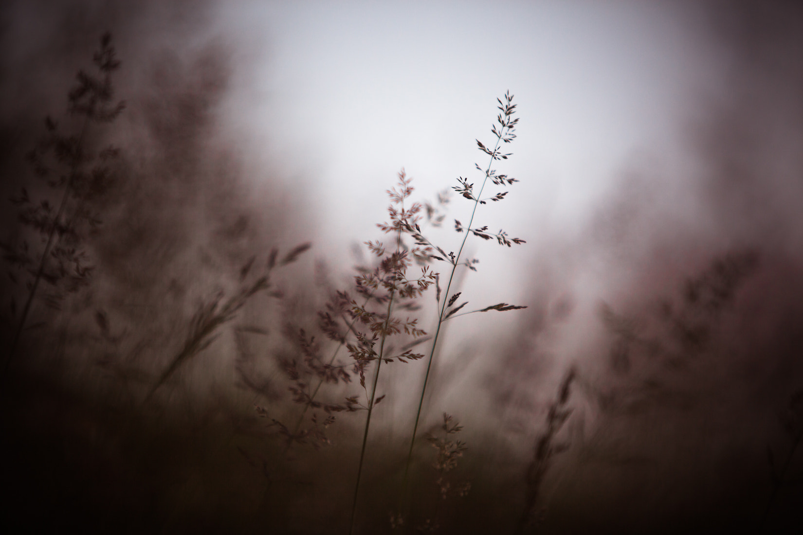 Photograph eveninggrass°2 by Tobias Ritz on 500px