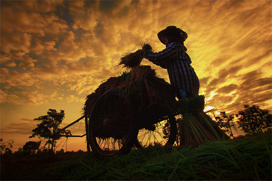 Photograph From the ground. : by jeerasak Chaisongmuang on 500px