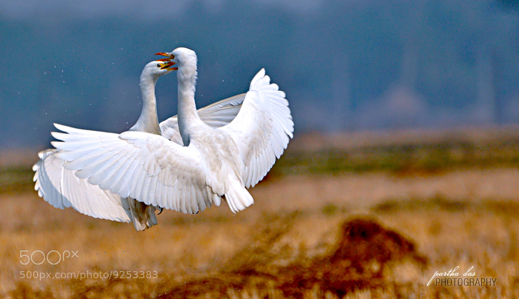 Photograph dance with me! by Partha Das on 500px