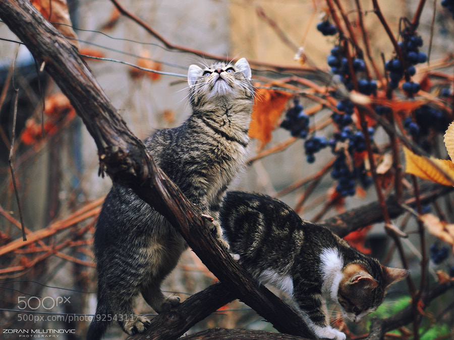 Photograph Little Hunters by Zoran Milutinovic on 500px