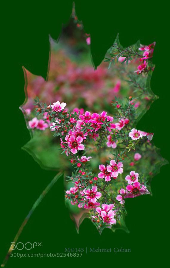 Photograph flowers & beautiful art by Mehmet Çoban on 500px