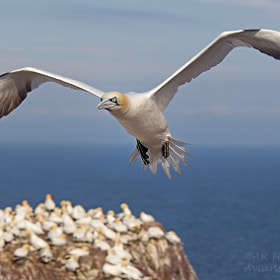 Over Bass Rock by Alfred Forns (AForns)) on 500px.com