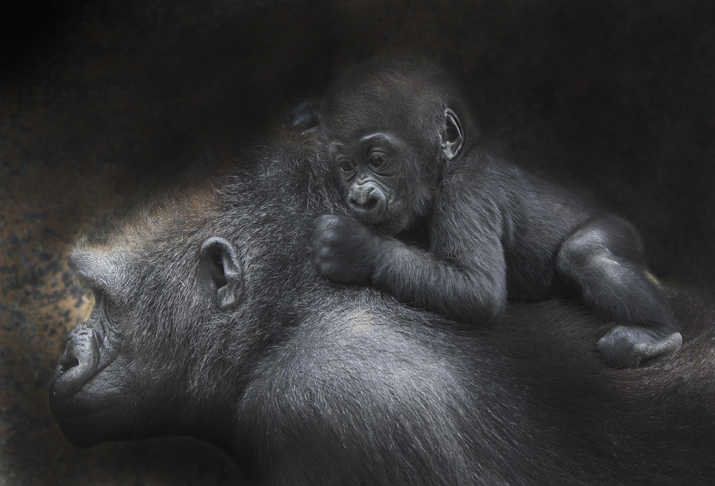 Photograph With mom. by Olga Shiropaeva on 500px