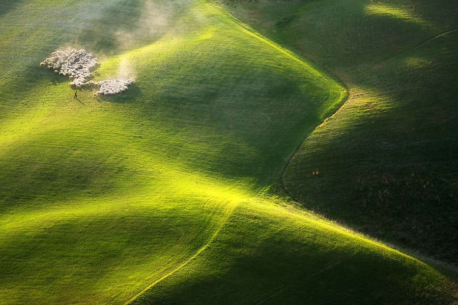 Photograph Afternoon grazing by Marcin Sobas on 500px