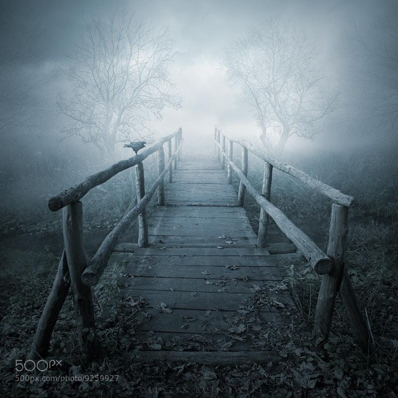 Photograph November's sorrows by Leszek Bujnowski on 500px