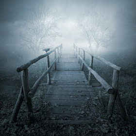 November's sorrows by Leszek Bujnowski (Alshain)) on 500px.com