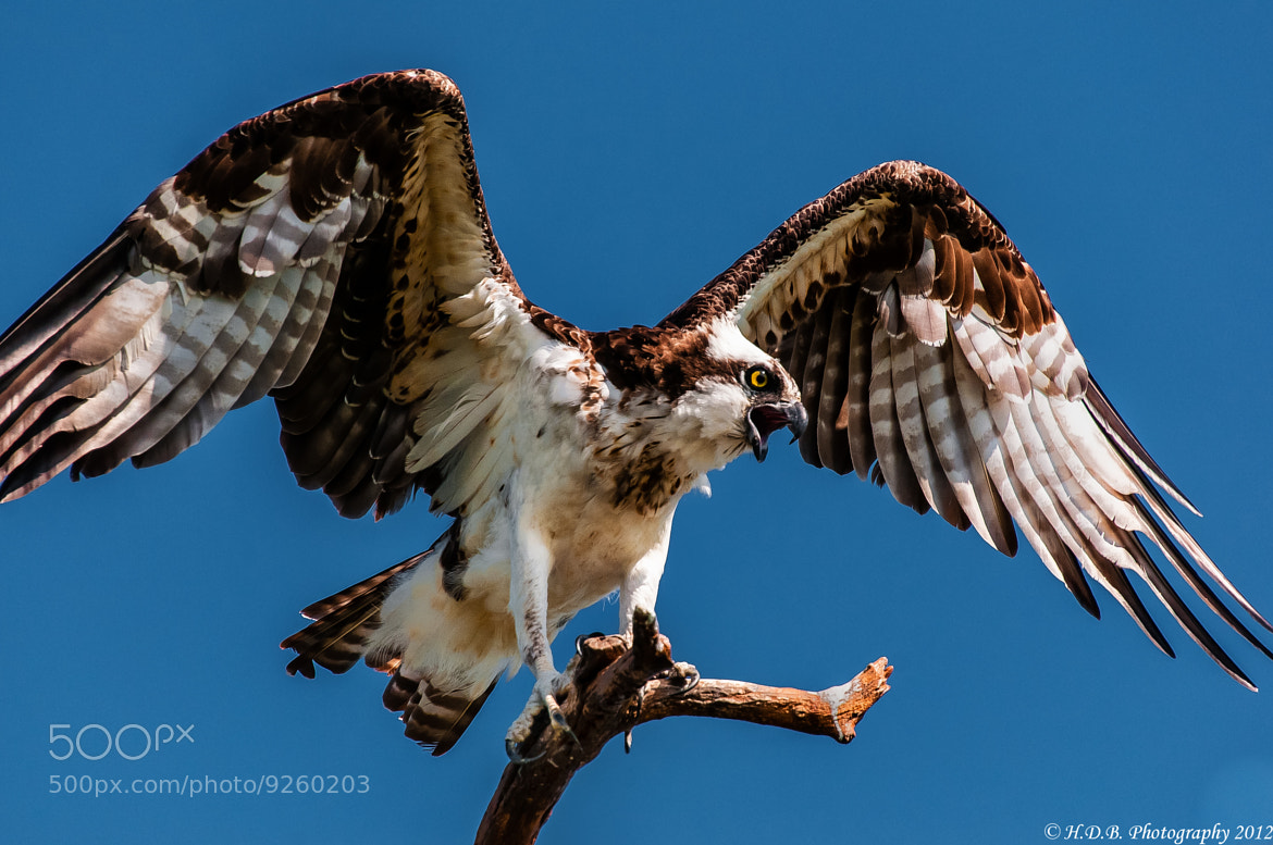 Photograph Wings Of Fury by Harold Begun on 500px