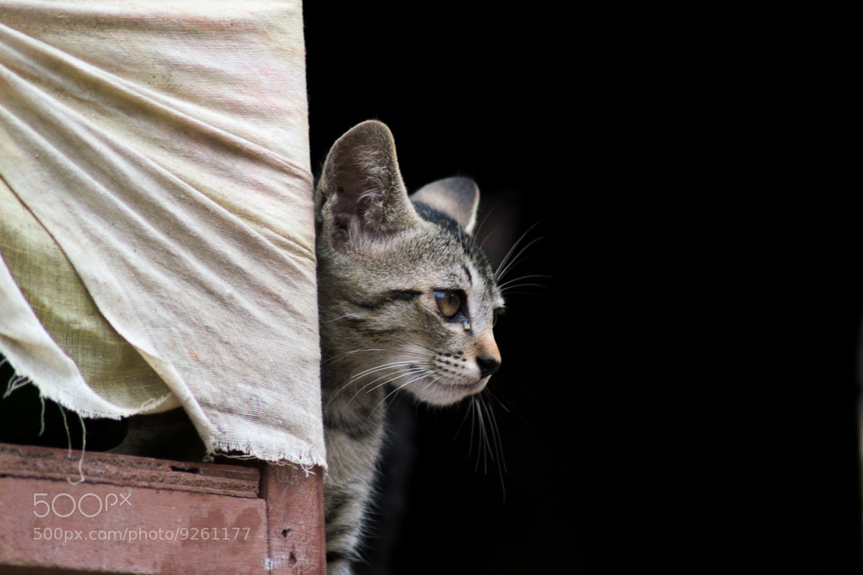 Photograph Cat by Ayush Bajracharya on 500px