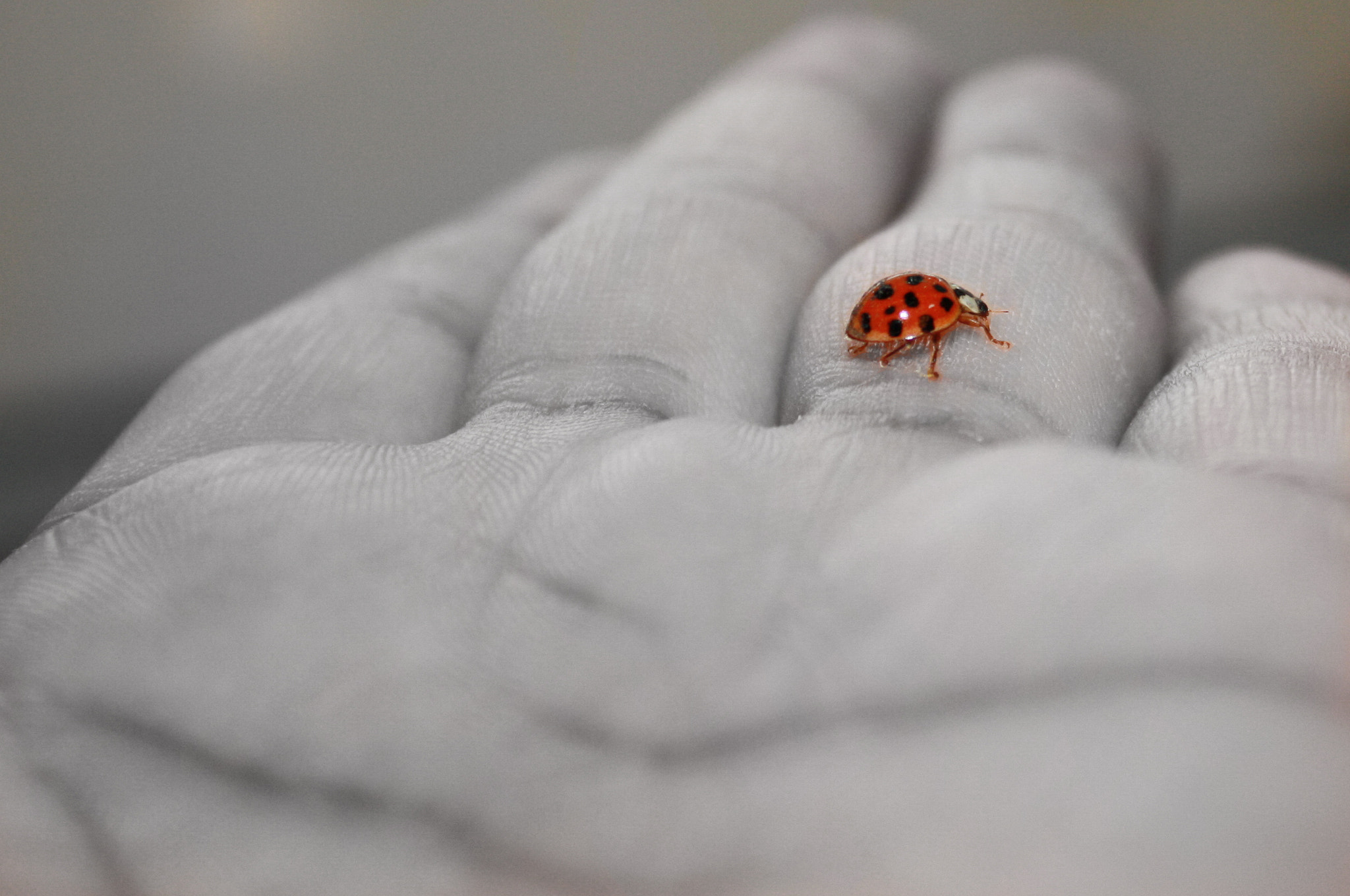 Photograph Lady Bug by M. Atif Murtaza on 500px