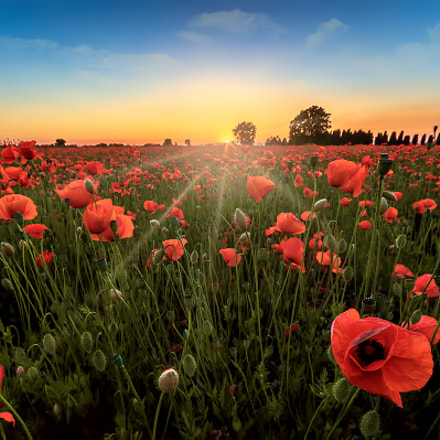 Welcome into the poppy field