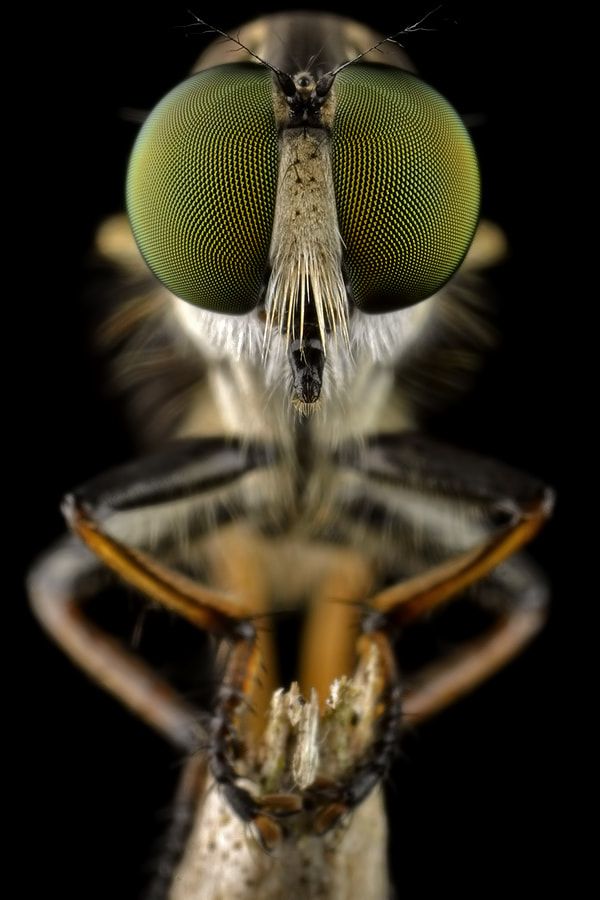Photograph RF Closeup by Donald Jusa on 500px