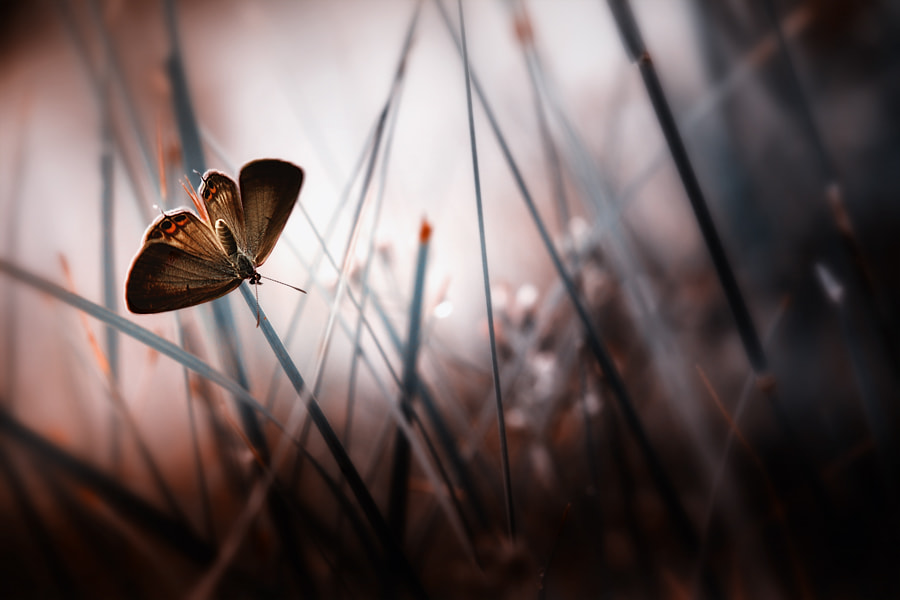 Photograph alone and confusion by Angga Ra Putra on 500px