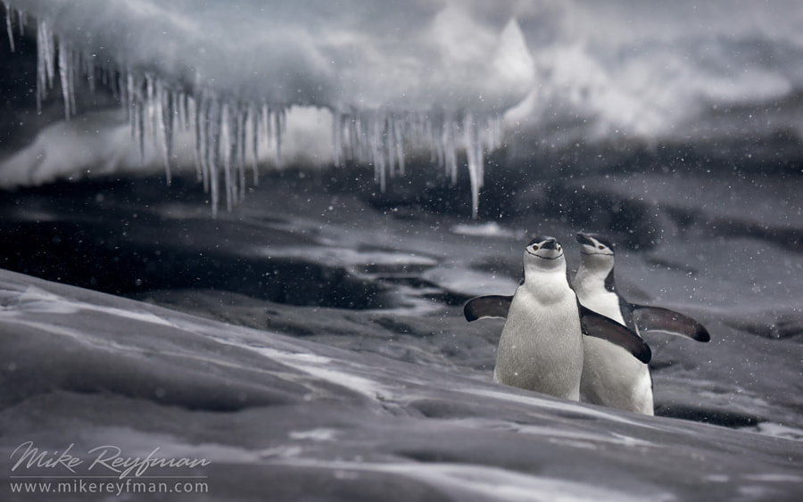 Photograph Let it snow! by Mike Reyfman on 500px
