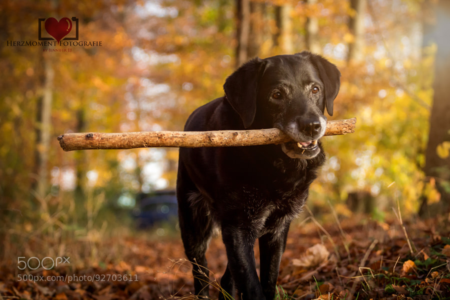 Photograph The big stick by HerzMoment Fotografie on 500px