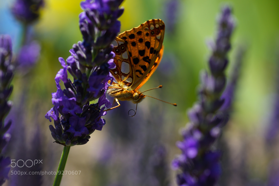 Photograph Butterfly by Marie Zavattaro on 500px