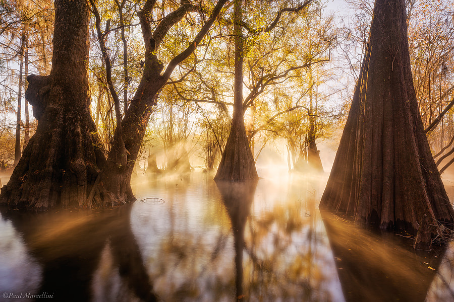 Photograph Swamp Steam by Paul Marcellini on 500px
