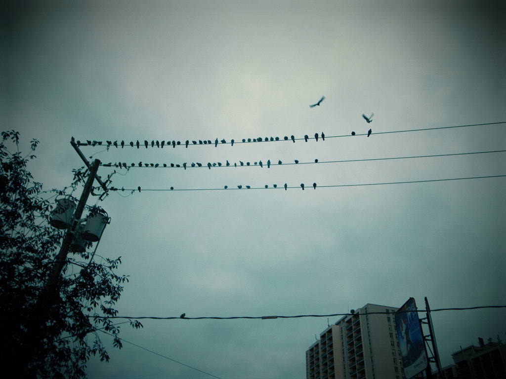 Photograph Birds on wire by Simon Carr on 500px