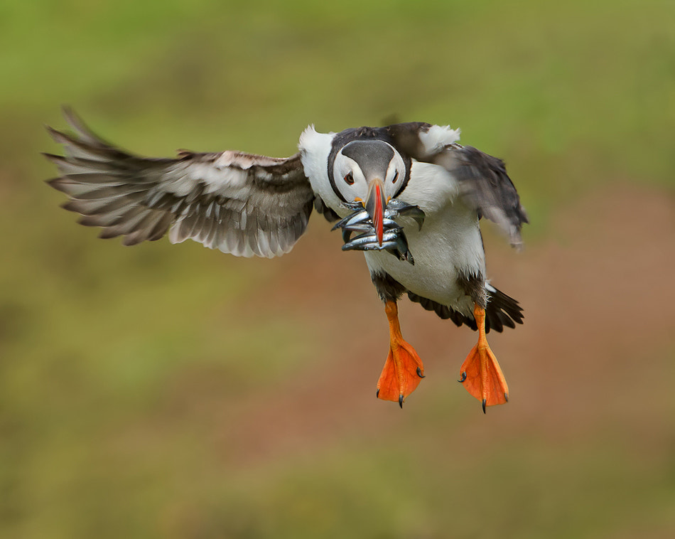Photograph Fast Food! by Phil  Morgan on 500px