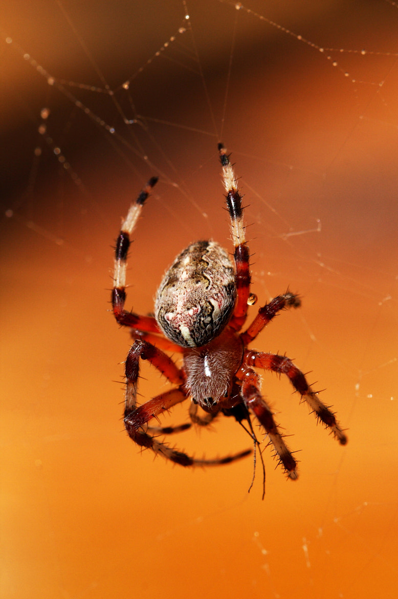 Photograph Arachnid by Ron Perkins on 500px