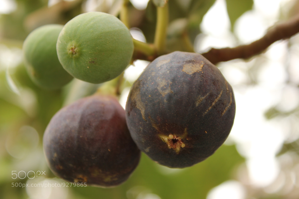Photograph Figs by SULTAN Al-Harthy on 500px