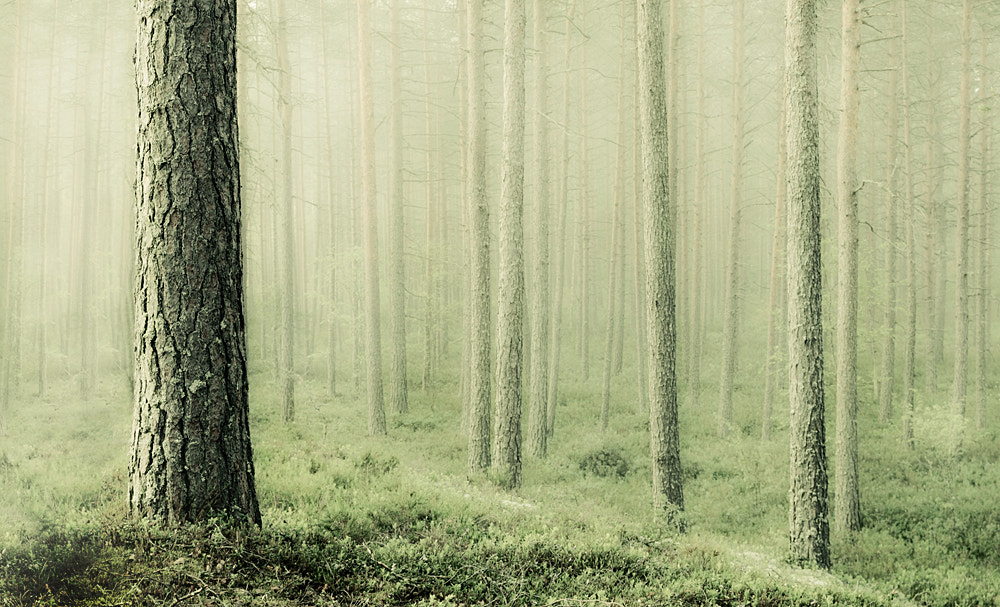 Photograph Solitude by Mikko Lagerstedt on 500px