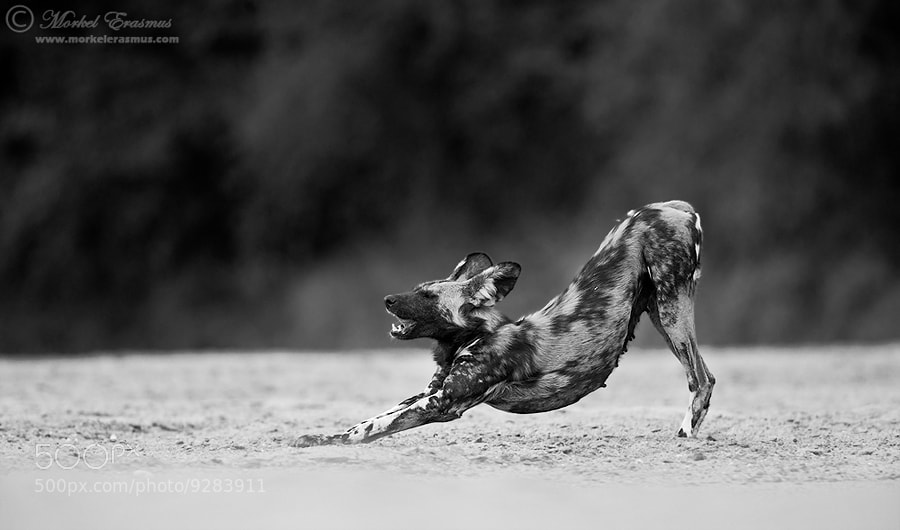 Photograph The Stretch by Morkel Erasmus on 500px