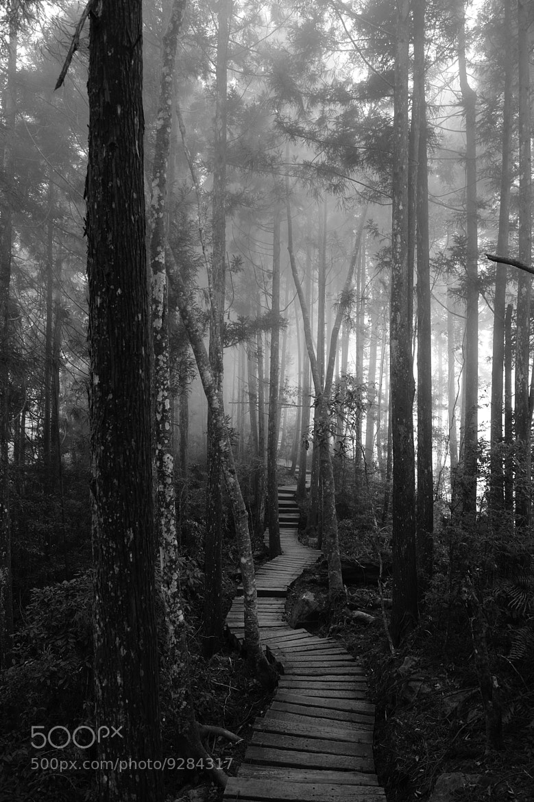 Photograph Secret Path by Arthur Lin on 500px