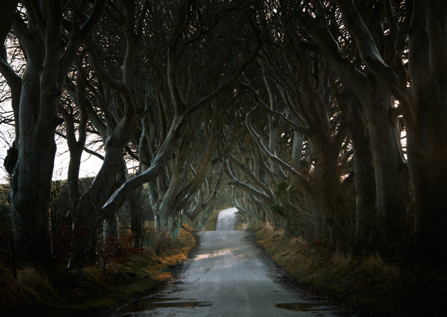 ѱ dark hedges by Andy Lee on 500px.com