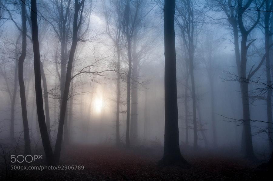 4 Mist and Sun by Csilla Zelko