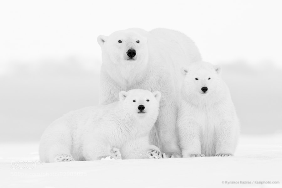 4 Happy Family by Kyriakos Kaziras