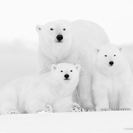 Happy Family, Canon EOS-1D X, Canon EF 600mm f/4.0L IS II USM